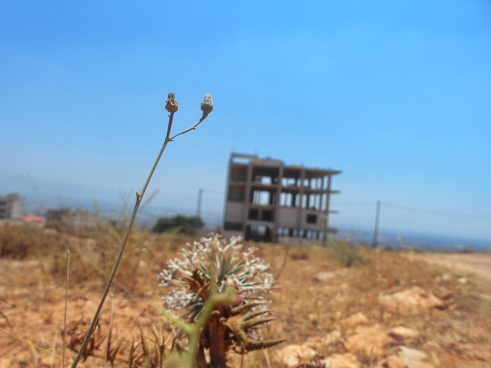 Beton-Ruine