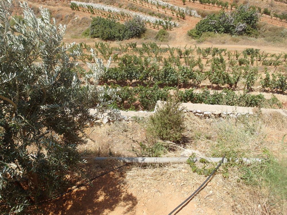 Terrassen-Weinbau Domaine de Baal